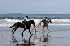 horses riding confidence